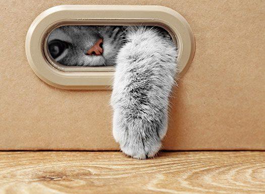 Shirlington House Kitten Playing in Box